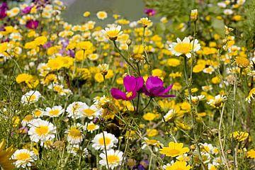 Akkerbloemen bloemen van W J Kok