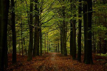 Herfstbos van Marloes Hoekema