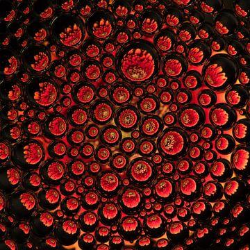 rode gerbera in druppels van