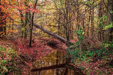 Kleuren van de natuur van Ratna Bosch