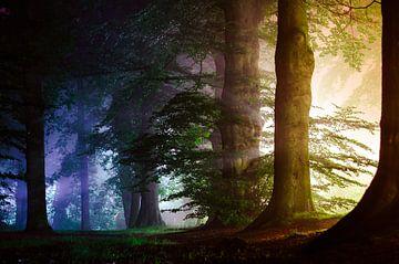Het licht van de nacht van Tvurk Photography