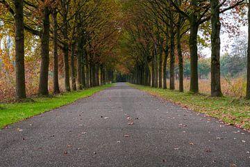 Bomen tunnel naar de toekomst. van Berend Kok