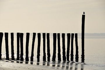 Zeeuwse kust van Esther van der Linden