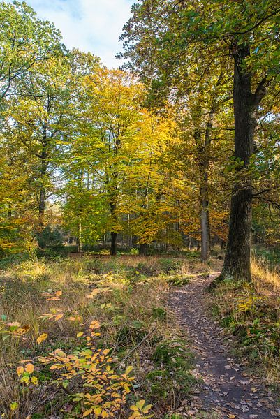 herfst12 van Geertjan Plooijer