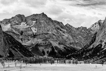 Grote esdoorn grond zwart en wit van Denis Feiner