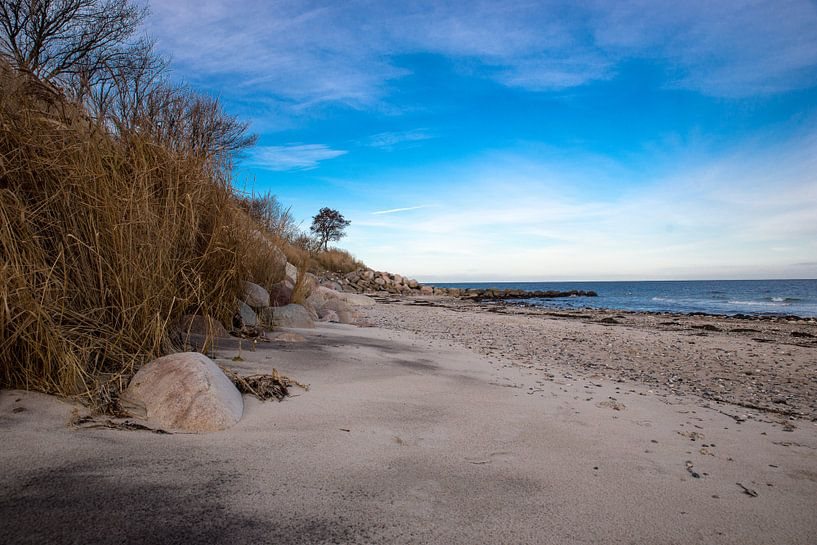 Wilder Strand von Tom van Dutch