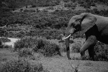 Ein Porträt eines Elefanten. von Floor Bogaerts