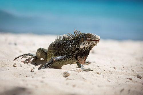 Lazy Iguana von Edwin Mooijaart
