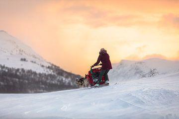 Husky slee over besneeuwde bergpas met zonsopkomst van Martijn Smeets