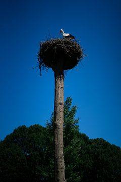 Storch auf dem Nest von Hildisvini