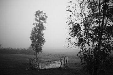 Bomen in de mist in de Zuidpolder van Jeroen de Lang