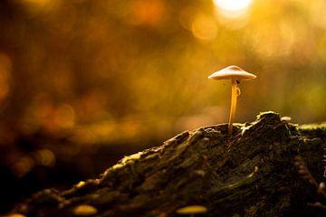 paddenstoel in de zon van Marloes Hoekema