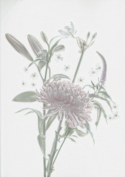 softcolor flowers van Franka vander Helm