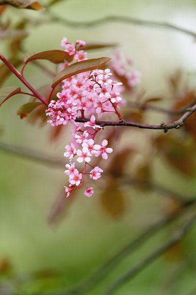 Spring blossom van LHJB Photography
