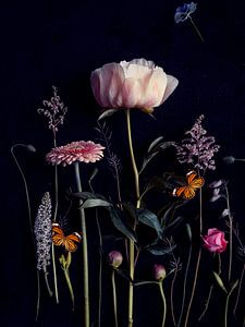 Blumenporträt (Pfingstrose)