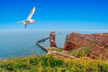 Insel Helgoland mit Langer Anna in der Nordsee von Animaflora PicsStock