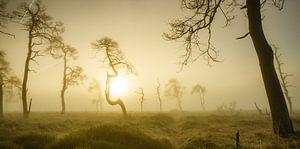 Skeleton Trees of Noir Flohay