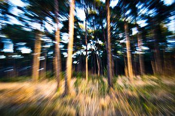 bewegende bomen van