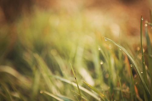 Ochtenddauw op gras van