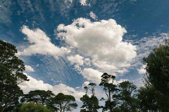 Wolken in de bomen, Victoria in Australië van Sven Wildschut