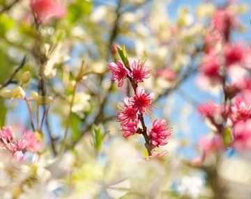 Toujours le printemps sur Corinne Welp