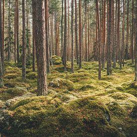 Lahemaa Nationaal Park van rosstek ®
