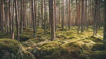 Lahemaa Nationalpark von rosstek ®