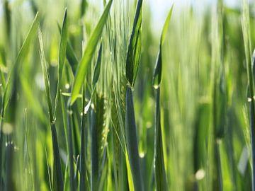 Sap groen grasveld van Christine Seilberger