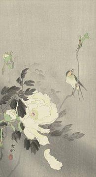 Vogel am Zweig an blühender weißer Pfingstrose von Ohara Koson