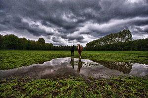 wideshot van twee paarden in de wei van foto-fantasie foto-fantasie