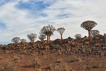 Köcherbäume Wald in Namibia von Jolene van den Berg
