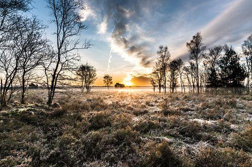 Sunrise Heatherfield in Nunspeet von René Vierhuis