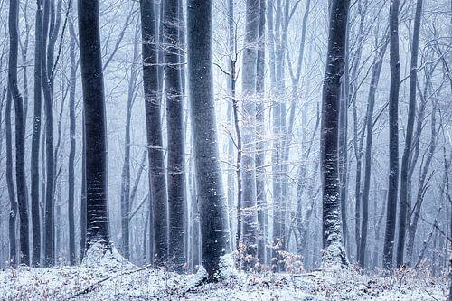 Winterwald van Oliver Henze