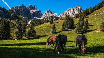 Chevaux dans les Alpes sur Jens Sessler
