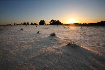 Gras en duinen van Mark Leeman