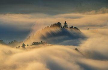 Bomen in mist van Wojciech Kruczynski