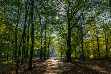 Herfst in het bos van Patrick Verhoef