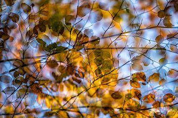Herfst van Ron van Gool