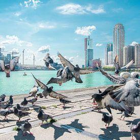De vogels Rotterdam van Niels Hemmeryckx