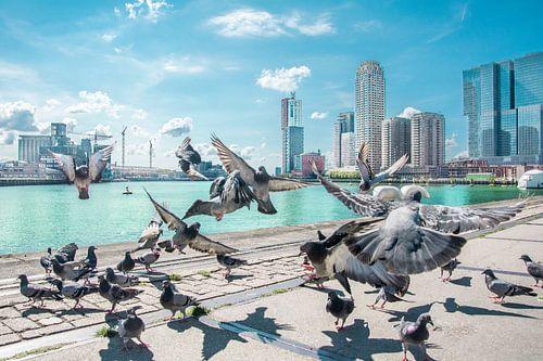 The birds Rotterdam von Niels Hemmeryckx