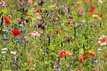 Bunte Sommerblumen auf einer Blumenwiese, Deutschland, Europa