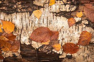 Herfstbladeren op boomschors van Michel Seelen