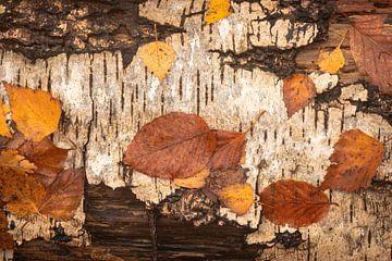 Herbstblätter auf Rinde von Michel Seelen