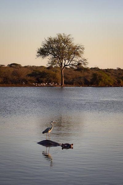Flusspferd mit Vogel im Wasser, Krüger-Nationalpark, Südafrika von Elles van der Veen