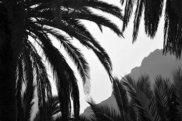 Ein Blick zwischen die Palmblätter von Carlijn van Gerrevink