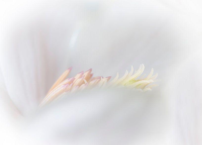 Magnolia 2 van Greetje van Son