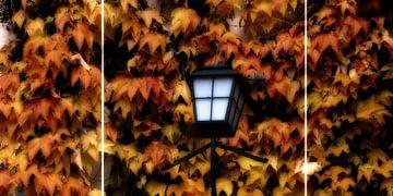 Herfst bladeren van Christine Nöhmeier