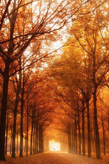 Herfst licht van Tashina van Zwam