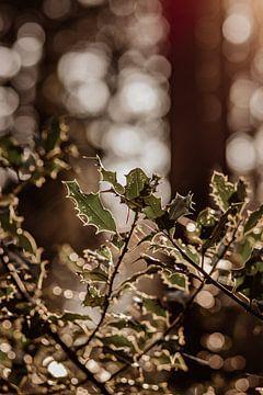 Hulst in het bos van Tessa Dommerholt