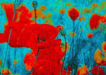 Mohnblütenmeer von christine b-b müller